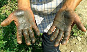 Mani di Charas Fiori di Gaia